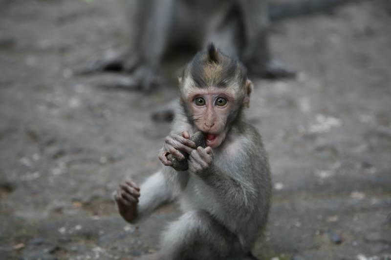 Monkey_020